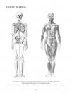 Anatomy Drawing School Human