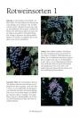 Wein Guide für Kenner