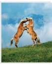 Leseprobe Das Pferdebuch