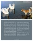 Leseprobe Das Hundebuch