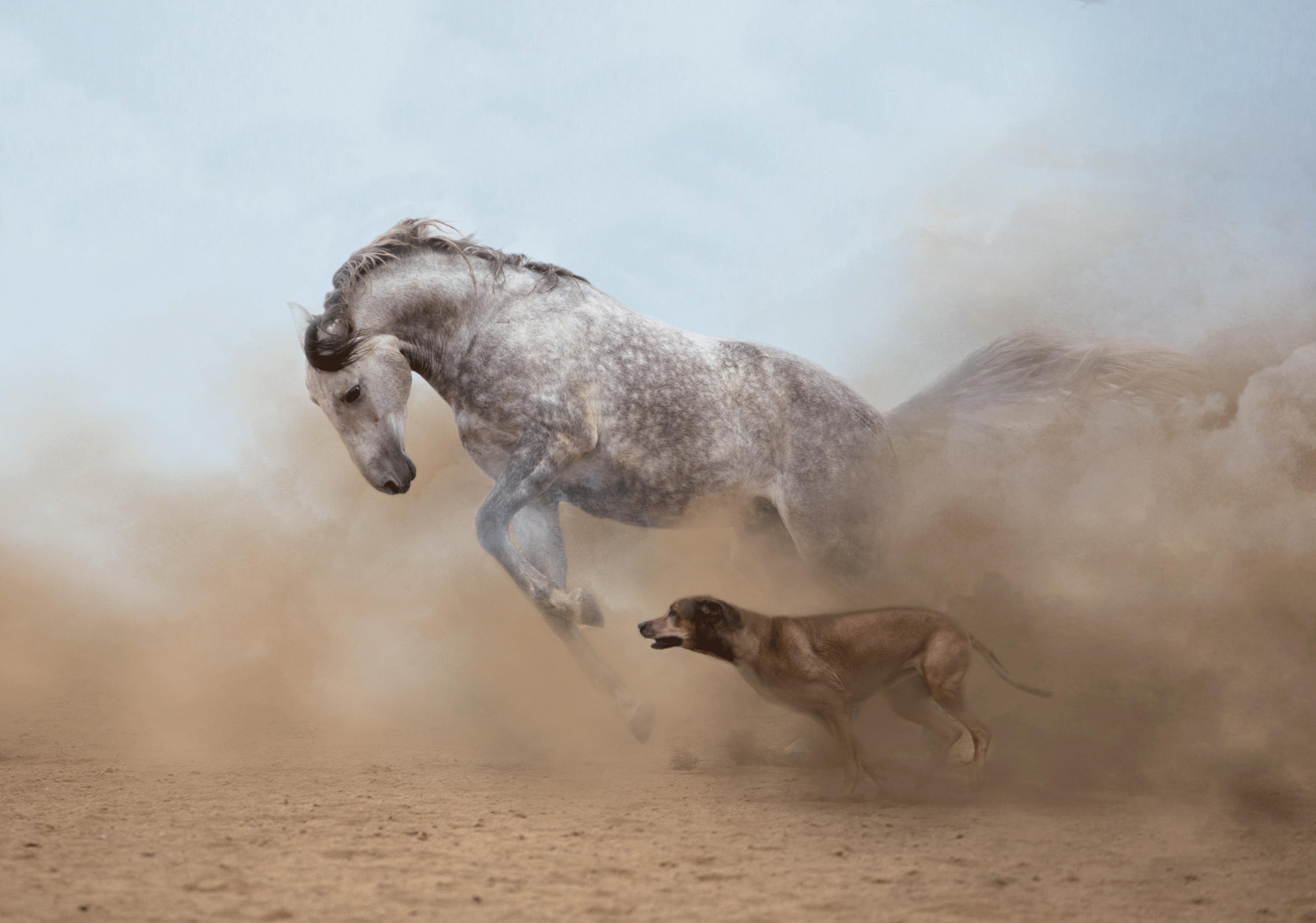 Keine Angst vor anderen Tieren, © Fotolia