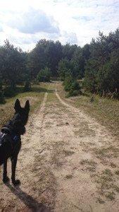 Spaziergang Wildgehege Glauer Tal