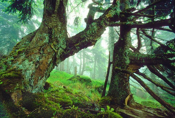 Urwald im Harz, © NRosing