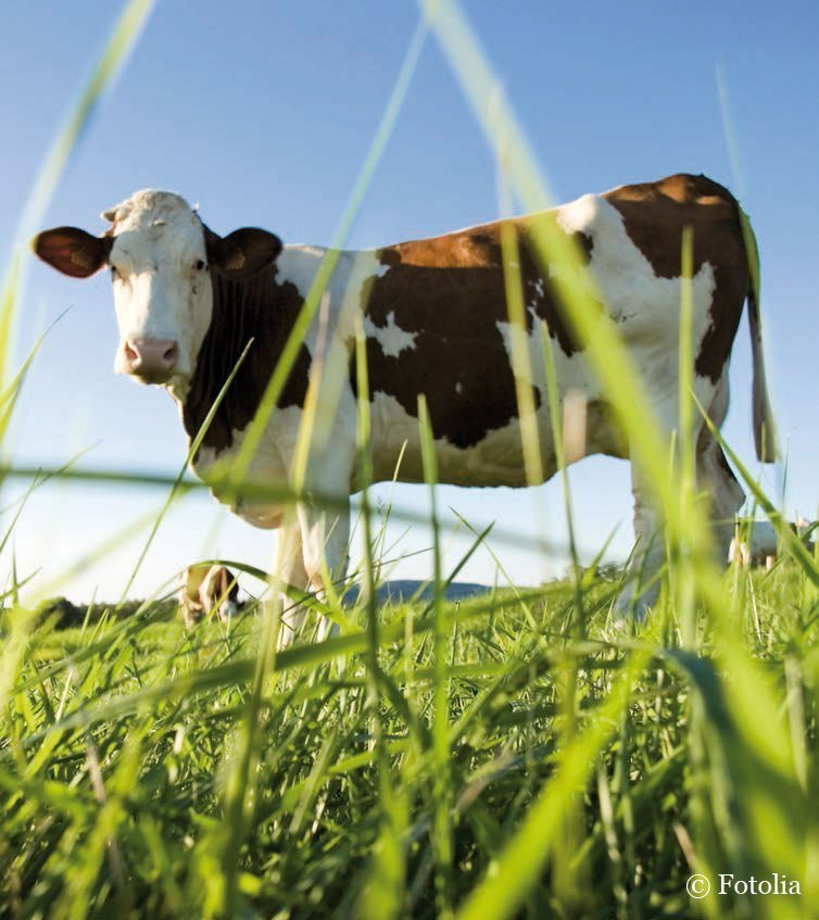Biofleisch von glücklichen Tieren