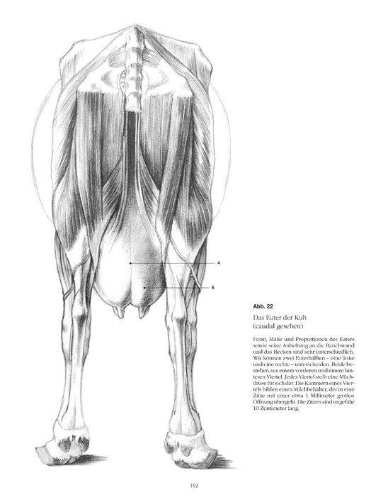Anatomische Zeichenschule Tiere für Anfänger und Fortgeschrittene