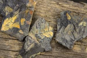 Fossilien vom Piesberg