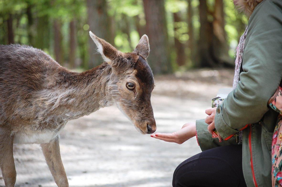 Besondere Natur-Erlebnisse im Wildpark Schwarze Berge (Foto: © Kira Ahrens, Wildpark Schwarze Berge)