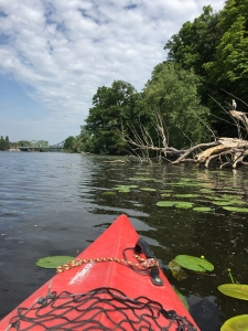 Wassersport inmitten idyllischer Natur: Kajaktour auf der Havel