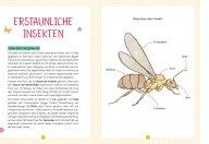 buchinnenseiten-Naturfuehrer-Insekten2-978-3-7415-2466-0