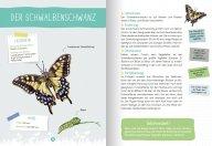 buchinnenseiten-Naturfuehrer-Insekten4-978-3-7415-2466-0
